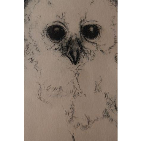 """Image of Vintage """"Pel's Fishing Owl"""" Pen and Ink Print"""