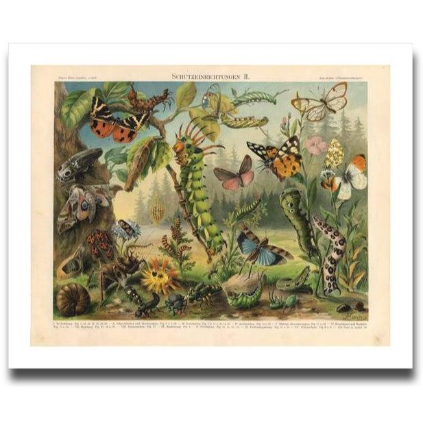 Image of Vintage Caterpillar Archival Print
