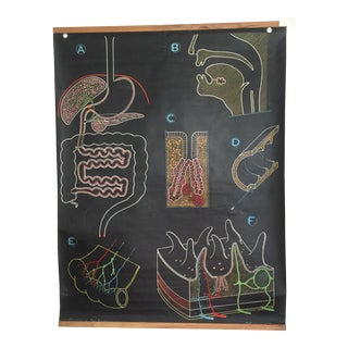 French Vintage Medical Anatomy Digestion Chart Chalk Plate
