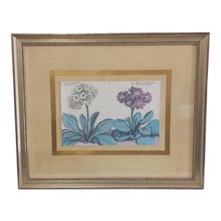 Crispin De Passe Auricola Framed Print