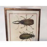 Image of Six Framed Scientific Bugs & Insects Prints