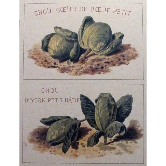 1900 Original French Vintage Vegetable Chart - Image 5 of 6
