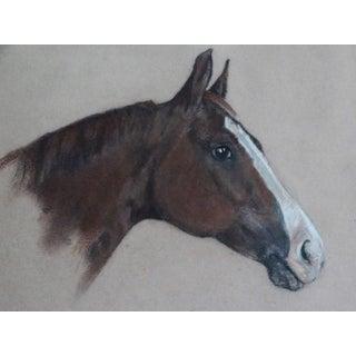 Equestrian Race Horse Portrait Drawing