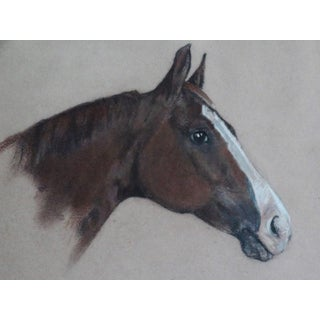 Equestrian Race Horse Portrait Drawing