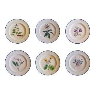 Davenport English Botanical Specimen Pearlware Set of Six Pottery Plates