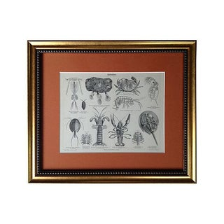 Antique Engraving of Lobsters & Crabs