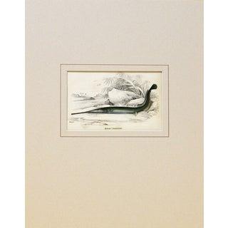 Sir William Jardine Green Fish Engraving