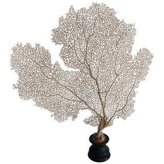Brown Faux Coral Specimen