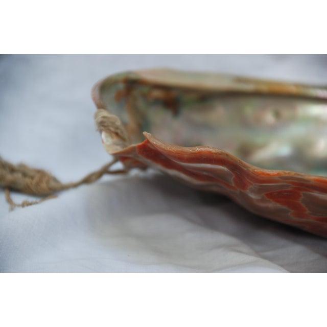 Vintage Large Abalone Shell - Image 6 of 8