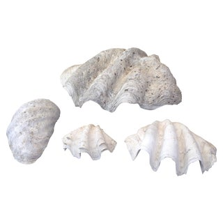 Authentic Large Natural Clam Shells - 4