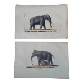 1829 Buffon Hand Painted Elephants