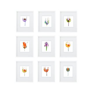 Botanical Groupings - Set of 9