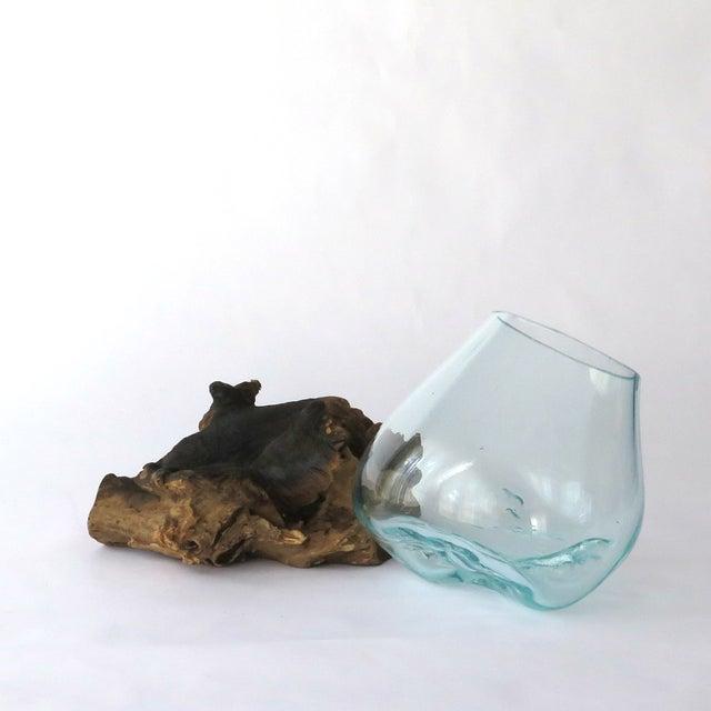 Image of Glass on Teak Driftwood Terrarium