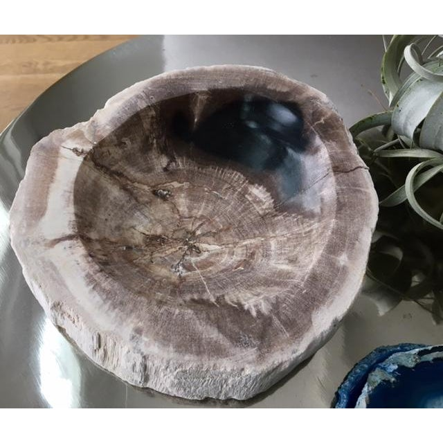 Image of Natural Petrified Wood Bowl