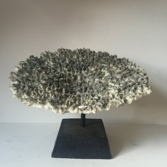 Image of Faux Coral Specimen on Stand