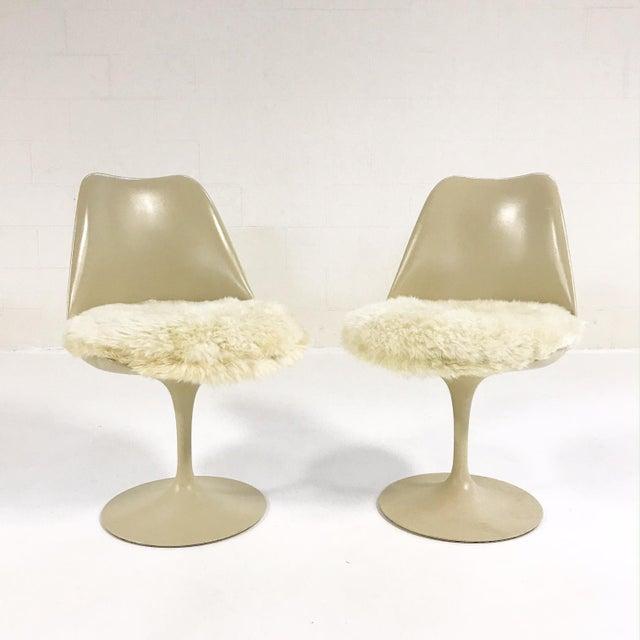 Eero Saarinen Tulip Chairs with Custom Brazilian Sheepskin Cushions - Set of 6 - Image 5 of 9
